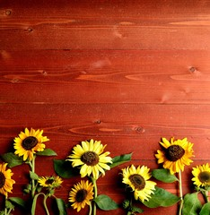 Sun flowers on brown wooden background