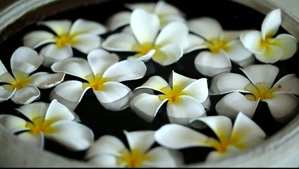 fragrant plumeria flowers in a bowl of water