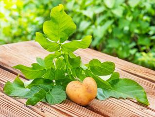 Kartoffelherz, mit Liebe gärtnern