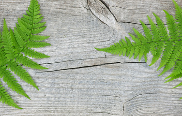 Fern leaf on the old wood