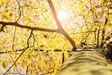 Herbstlicht im Baum – Version 1