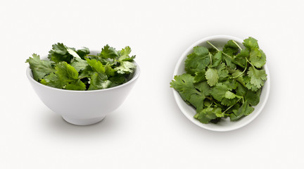 coriander  isolated on white background