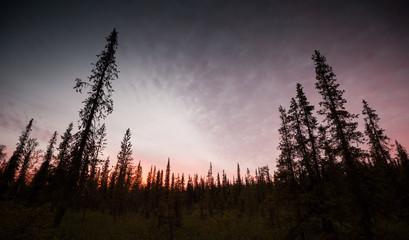 dark northern forest