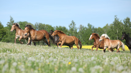 Very various barch of horses running on pasturage