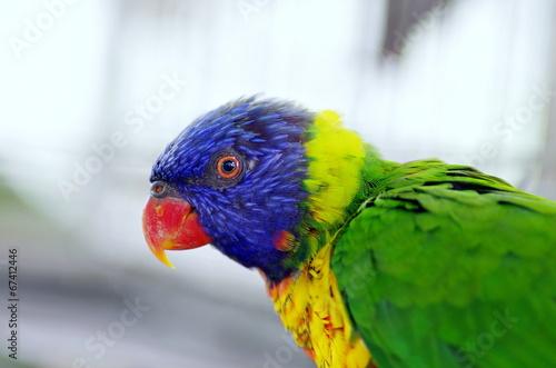Tuinposter Toekan 鳥