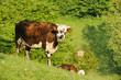 Animal ferme 122
