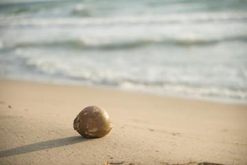 砂浜とヤシの実