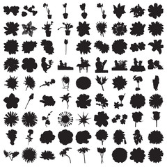 Hundred Flower Silhouettes
