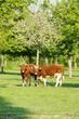 Animal ferme 125
