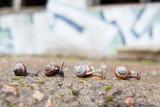 Group of small snails going forward poster