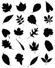 Black silhouettes of foliage on a white background, vector
