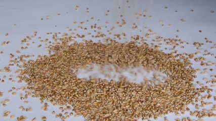 Wheat Seeds into White Background