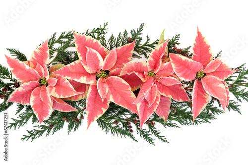 Poinsettia Flower Display