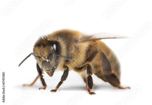 Foto op Canvas Bee abeille