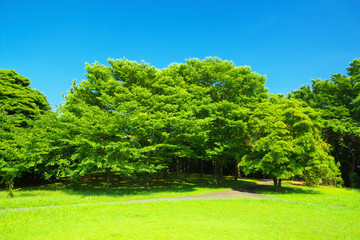 Fresh verdure with blue sky