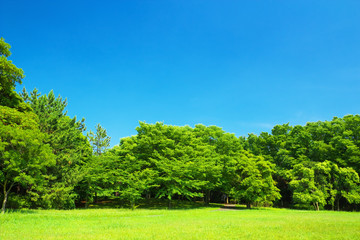 Fresh verdure with blue sky