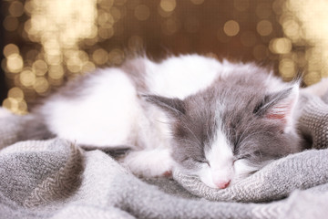 Beautiful cute little kitten on shiny background