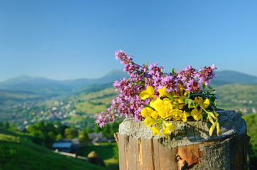 Hypericum flowers and thyme on a background of mountains (Saint-