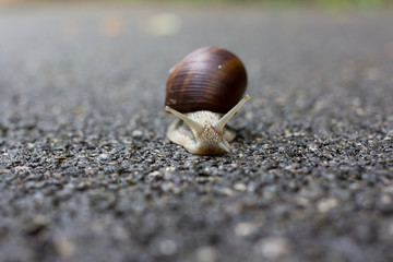 A small snail moving slowly with his house