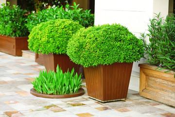 Garden pots with lush bushes