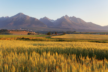 Wheat field with Tatras in background
