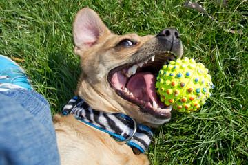 Kleiner spielender Hund