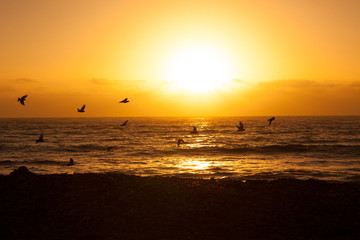 Birds fly over sun before sunset on beach at sea shore