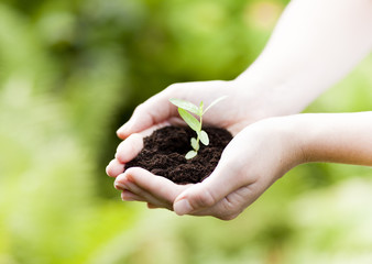 new life, plant in hands - grass background