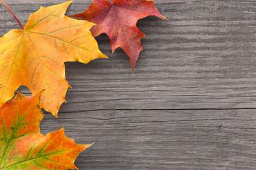 Bunte Ahornblätter auf altem Holz, Herbst, grunge, plakativ