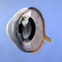 Sezione di un occhio
