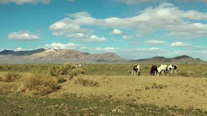 Pferde in der Wüste horses in the desert Nevada