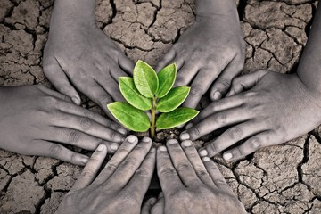 hands joining together around a tree growing on cracked earth