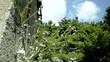 Carduus defloratus Ringdisteln Чертополох Oset Cardo
