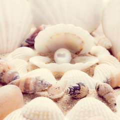 shell on beach  with a instagram filter