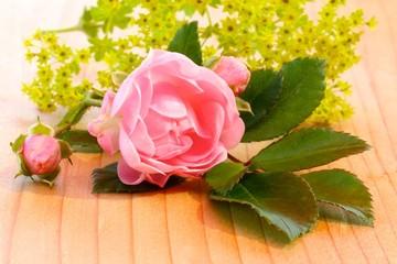 rosenblüte und frauenmantel