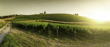 Fototapety Vineyards in Tuscany