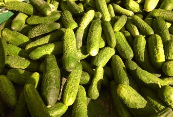 Cucumbers at farmers market