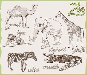 animals from the zoo