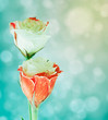 Eustoma flowers on blurred background with bokeh.