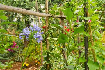 Wilder Garten