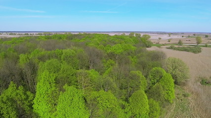 beautiful green wood with  rural landscape. Aerial summer