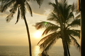 sunset with palm in goa