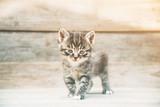 Fototapeta Mały kotek