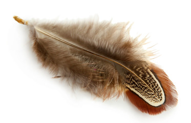Beautiful decorative feather , isolated on white