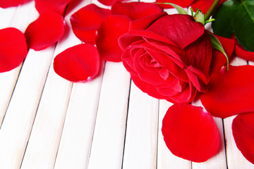 Beautiful petals of red roses on wooden background