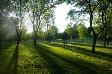 Public park in summer