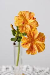 Dos flores amarillas, Don Pedro