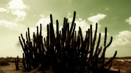 Cactus timelapse 02
