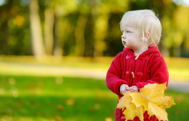 Adorable toddler girl holding yellow maple leaves