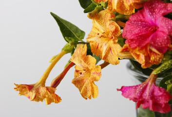 Ramo de flores amarillas y rosas